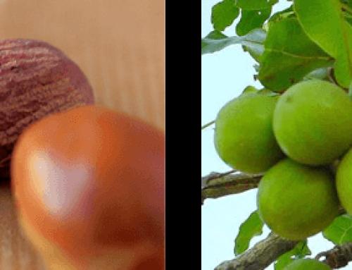 Shea maslac (karite)