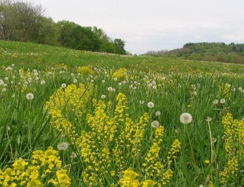 Proljeće u kuhinji – šparoge, maslačak, kopriva